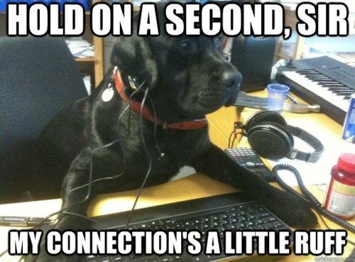 Funny_Dog_Meme 17 18 funny dog memes that will make you lol dogexpress