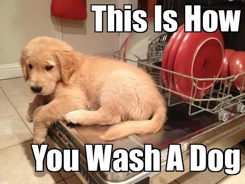 Funny Puppy Memes: 18 Funny Dog Memes That Will Make You LOL