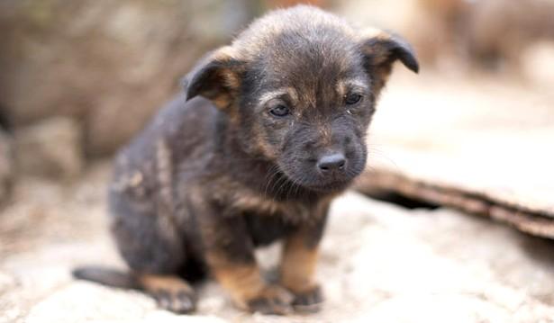 adopt a stray dog _09