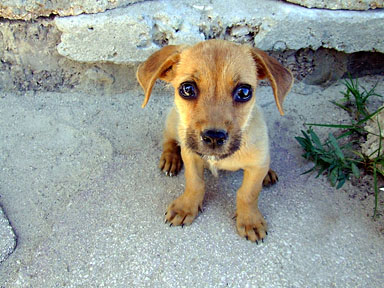 adopt a stray dog 03