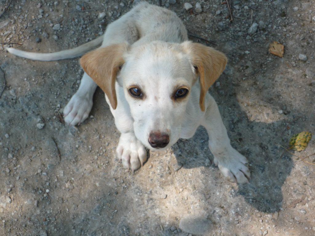 adopt a stray dog 06