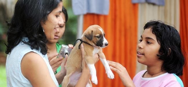 adopt stray dog 10