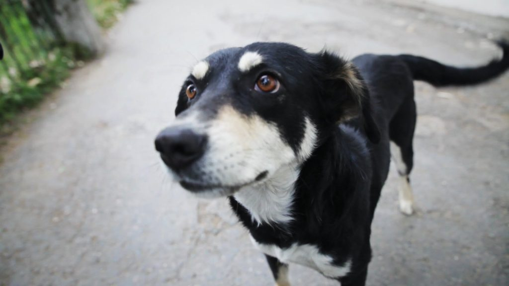 adopt a stray dog 05