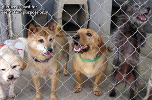 imported dog breeds 1