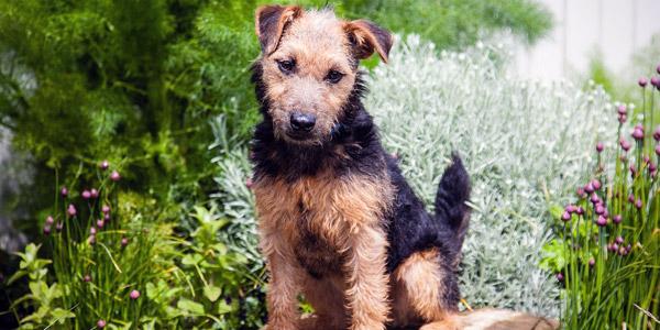 Dhoni Dog Breed Name