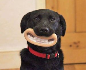 Funny Dogs 1