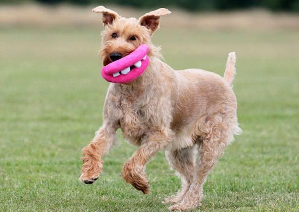 Funniest Dog Chew Toys