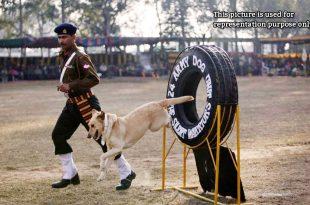 ITBP Canine Squad Training