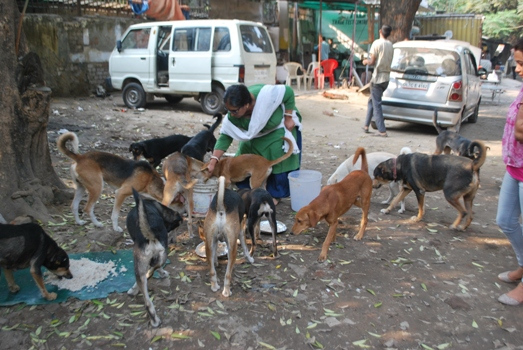 sulakshmi-dasgupta-feed-dog