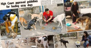 Guidelines For Feeding Stray Dogs