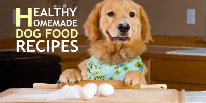 5 Healthy Homemade Dog Food Recipes