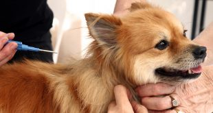 Microchip Licence Is Mandatory For Pet Dogs