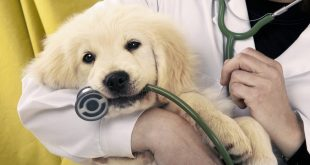 free clinic for pets