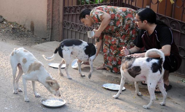 Feeding To Stray Dogs_2