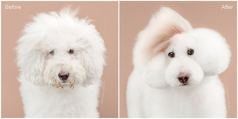 Dogs With A New Haircut 5