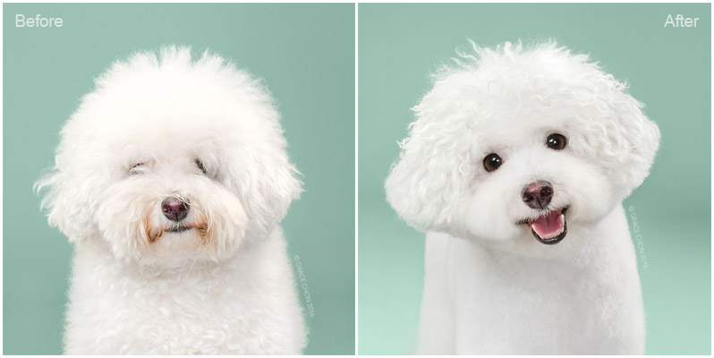 dogs with funny hairstyles 1
