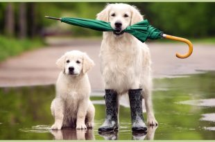 Pet Dog Healthy