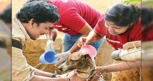 Shelter For Street Dogs