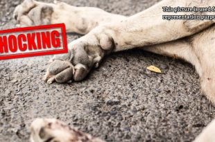 3 stray dogs poisoned
