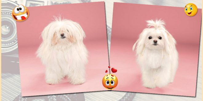dogs with funny hairstyles