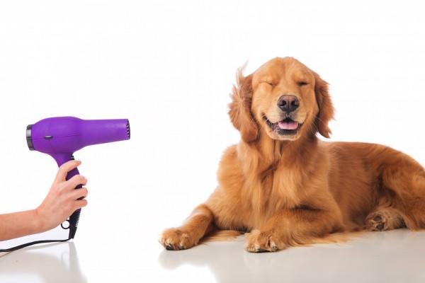 pet dog healthy 2