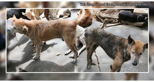 40 Stray dogs poisoned
