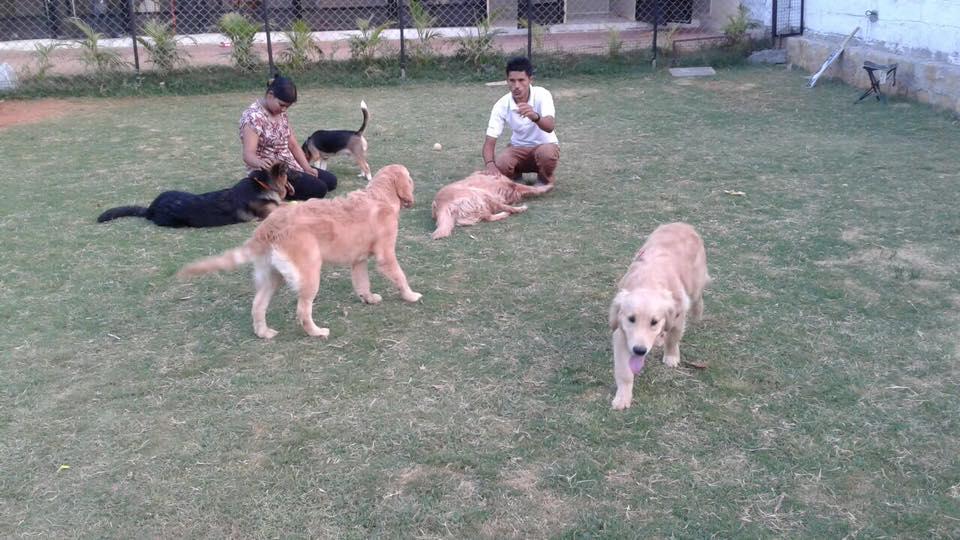 Dog day care_2