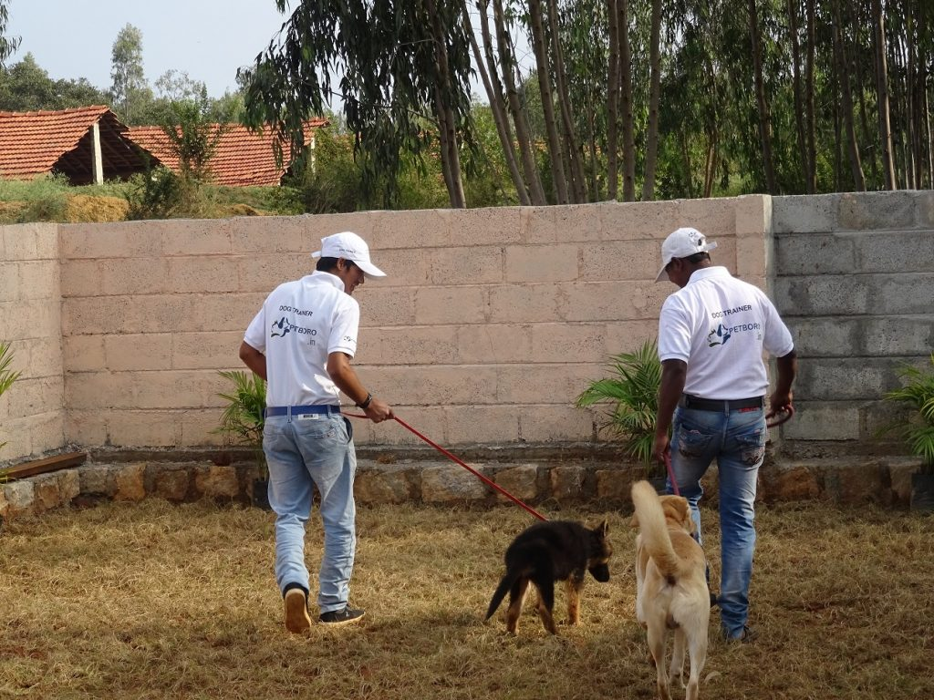 Dog day care_4