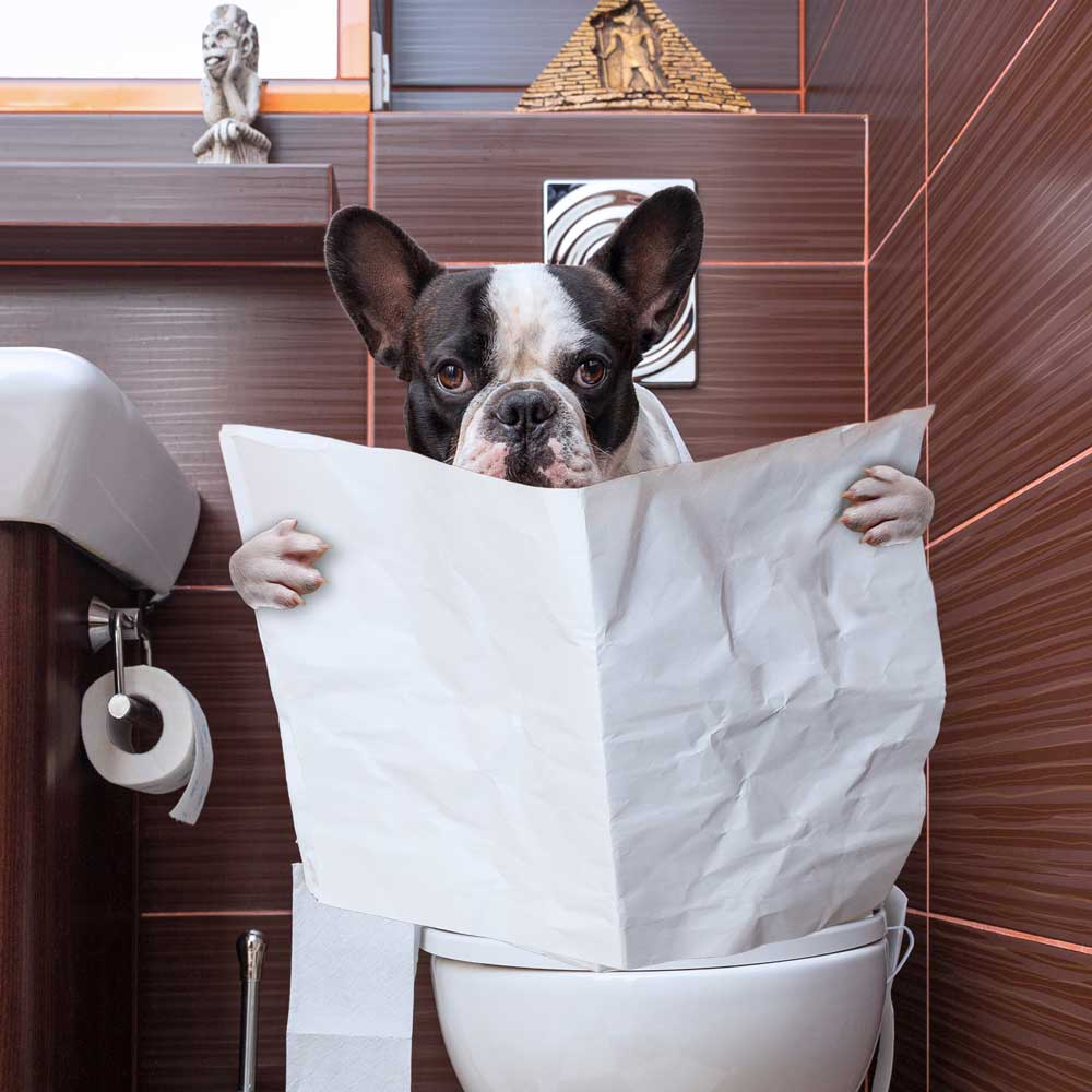 Causes Of Diarrhea In Dogs_1