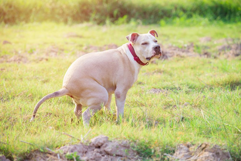 Causes Of Diarrhea In Dogs_3