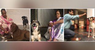Stray Dogs of delhi