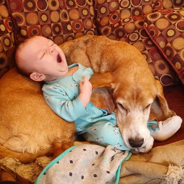 Cute Babbies and puppies