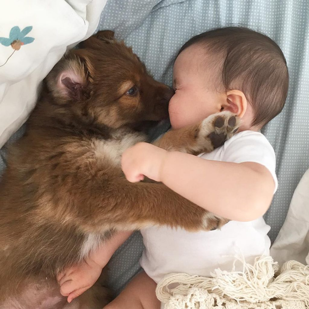 Cute Babies and puppies_4