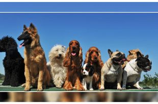 Dog show