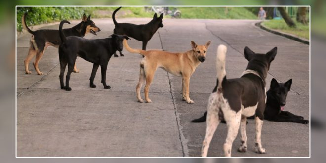 New born saved by stray dogs_1