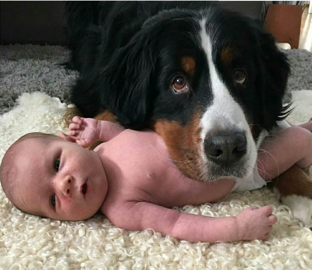 babies and puppies_14