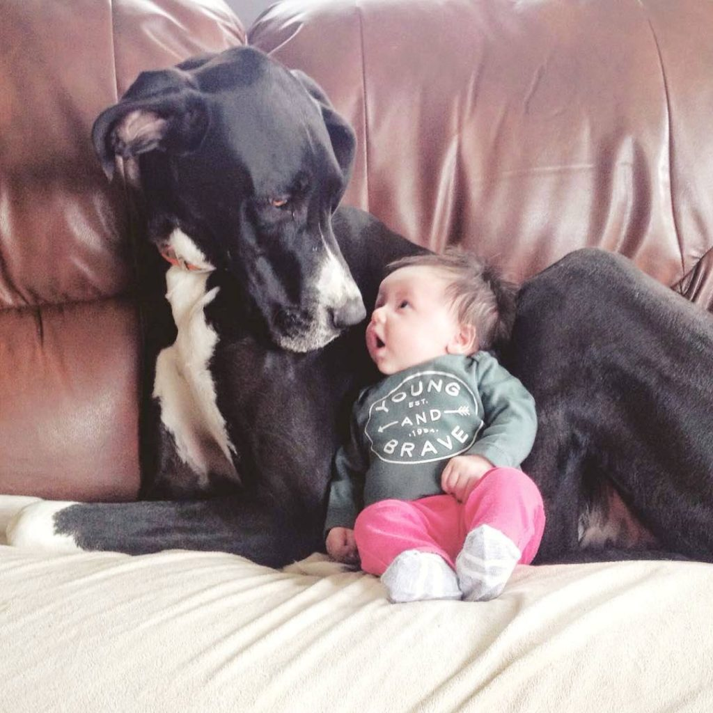 babies and puppiues_11