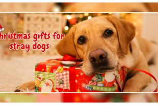 Christmas gifts for stray dogs