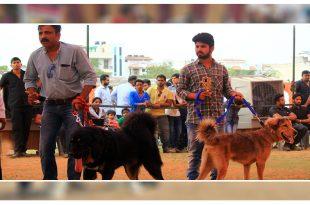 Dog Show In Amritsar