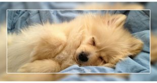 Dogs Sleep So Much
