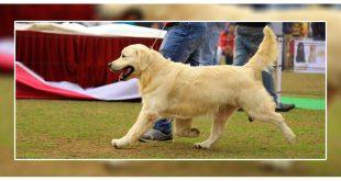Patiala Dog show