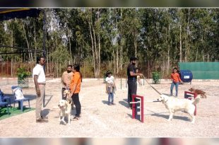 Petboro dog park