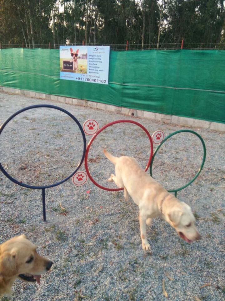Petboro dog park_2