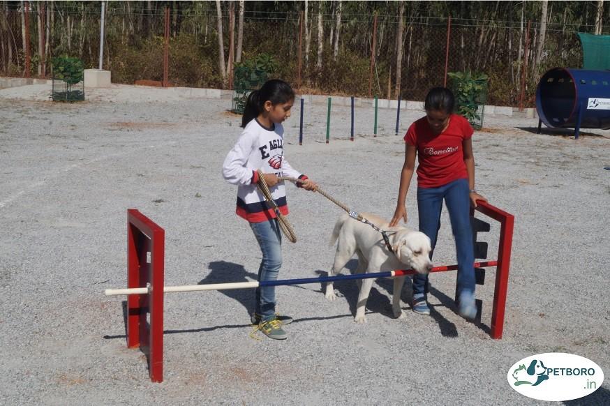 Petboro dog park_3