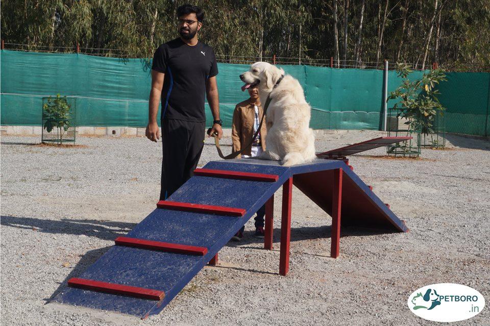 Petboro dog park_4