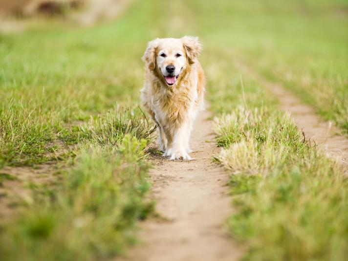 Senior dog_3