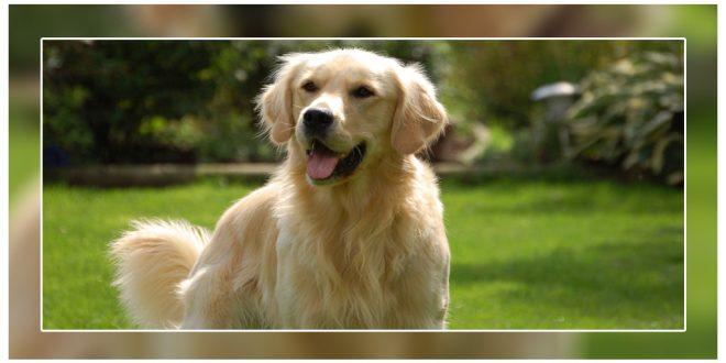 Loudest dog breeds