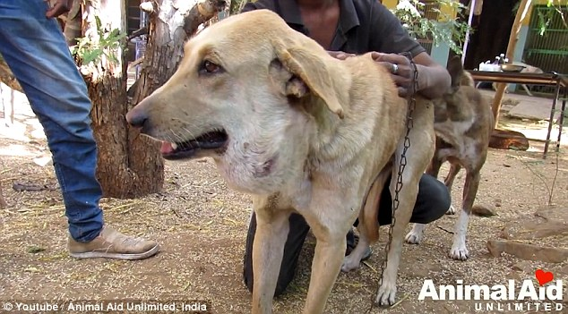 A stray dog's life _2