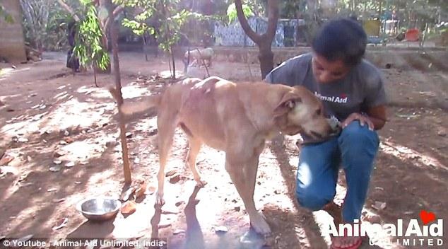 A stray dog's life _6