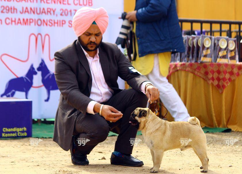 Dog Show in Chandigarh_4